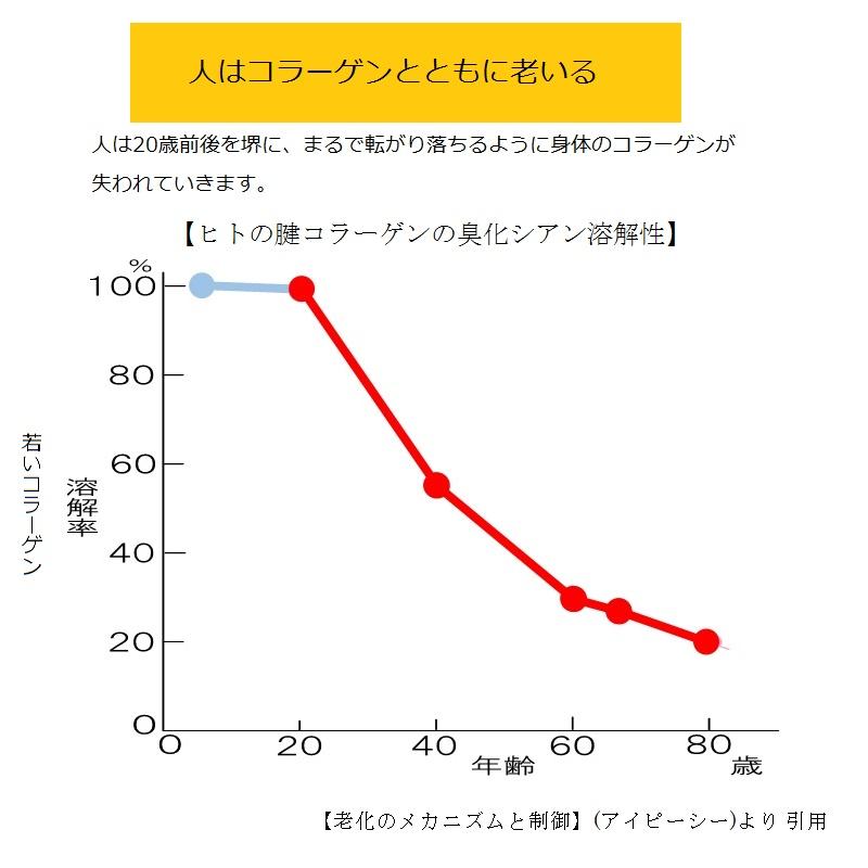 ヒトの腱コラーゲンの臭化シアン溶解性グラフ